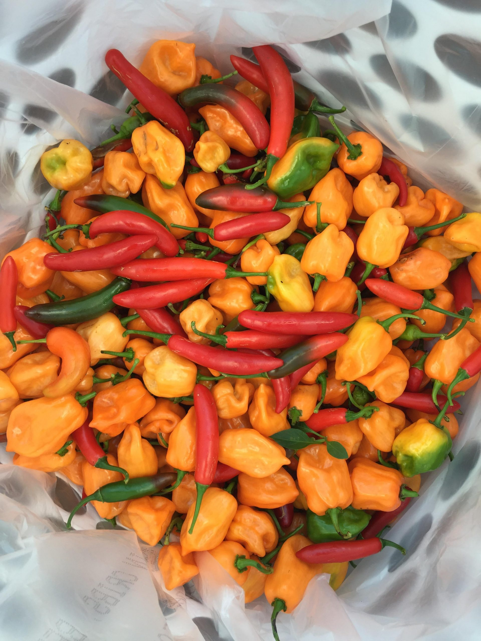 Hot peppers for pantry